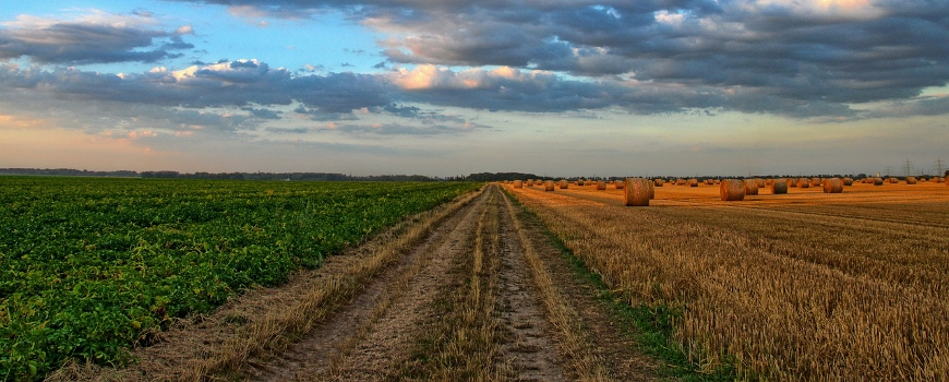 Andalusia is leading a project that will lay the foundations for the mitigation of and adaptation of agriculture to climate change throughout the Mediterranean basin.